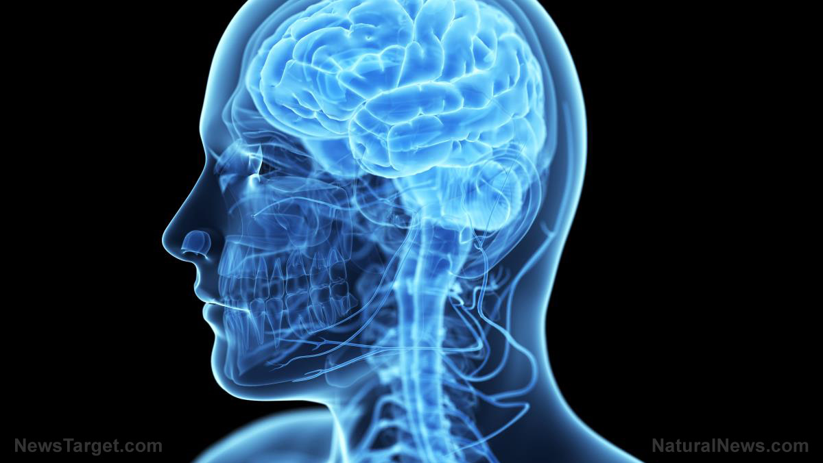 CONFIRMED: Omega-3s boost blood flow to regions of the brain ...